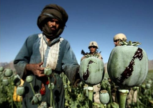 An Afghan man harvests opium in a poppy field while US soldiers look on in a village in Golestan district, Farah province, Afghanistan (Caption: The Telegraph; Photo: Reuters)