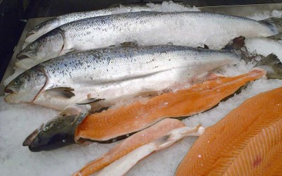 BUYER BEWARE! The FDA Just Approved GMO Salmon.
